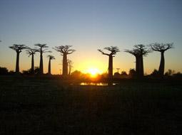 インド洋最後の楽園  マダガスカル  ~リゾート&ネイチ...