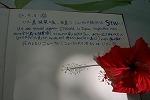 【写真下】 宣伝バッチリのメッセージ。ハイビスカスを添えて。