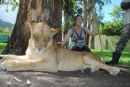 【モーリシャス】ライオンさんと感動のご対面♪