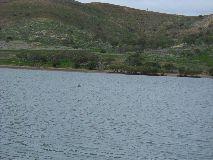 【写真左】イルカ探し中。遠ーくにイルカの背が見えます。