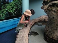 【写真右】水族館では珍しい魚がいっぱい。娘も夢中でカメの写真を撮ってました