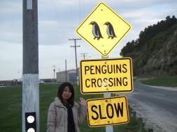 ★ブルーペンギンを訪ねて、オアマルへ★