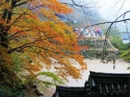 秋のしっとり韓国♪釜山・慶州の旅