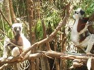 マダガスカル~リアルなアフリカ~