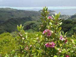 ボラボラ島駐在員が行く・・・・山と川を求めて・・・・ライ...