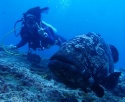 憧れのブラックマンタを探して☆ニューカレドニアでダイビング♪