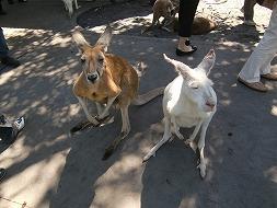 動物と自然の宝庫!西オーストラリアへ