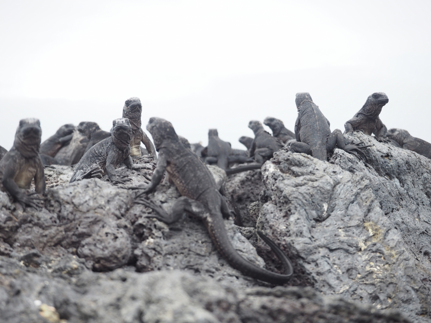 ワイルドアイランド・イサベラ島