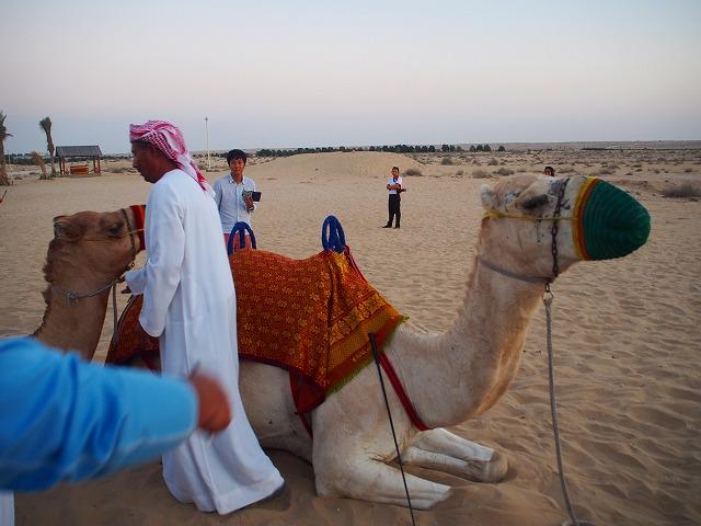 UAEを巡る🐫ドバイとアブダビの要所かいつまみ✨🐫