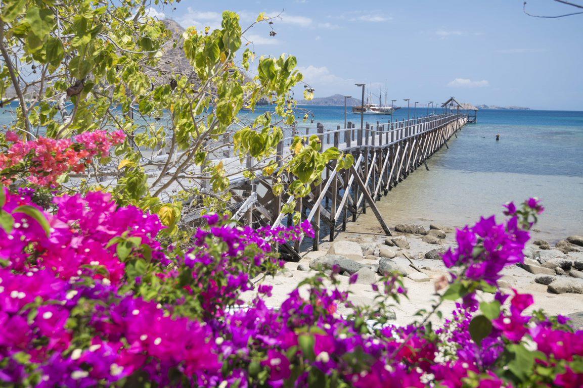 ピンクビーチに青の洞窟**カラフルなコモド島の旅**