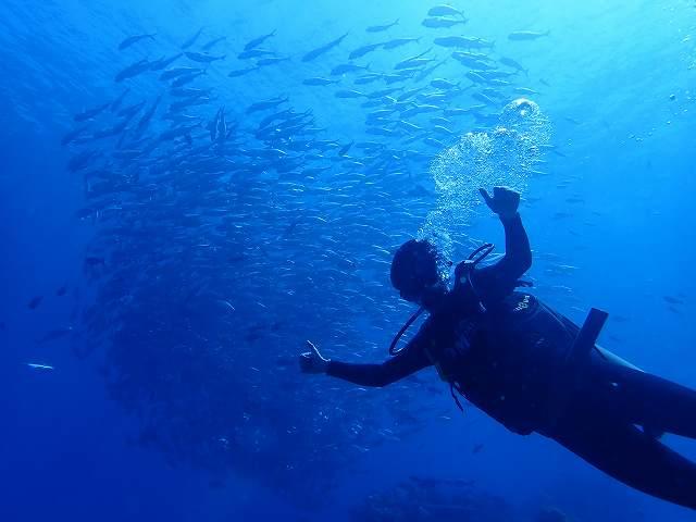 ダイビング王国パラオ①~海の中はパラオ、陸はフィリピン!...