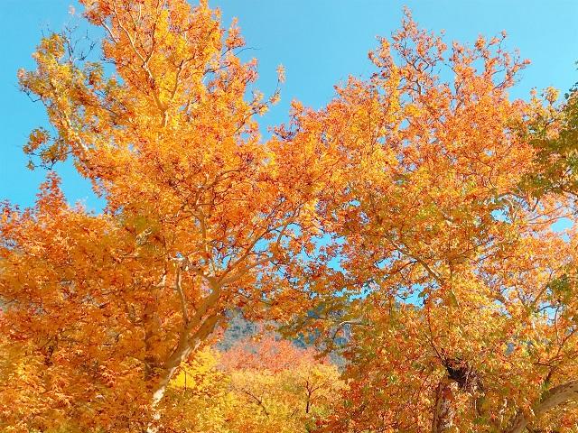 黄葉シーズンのセドナで市内観光