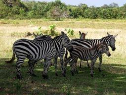 「カラウィト島」訪問ツアーに参加すれば野性動物に会えるかも