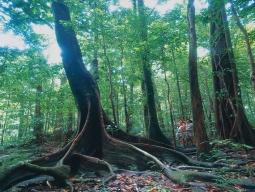熱帯雨林と高原地帯