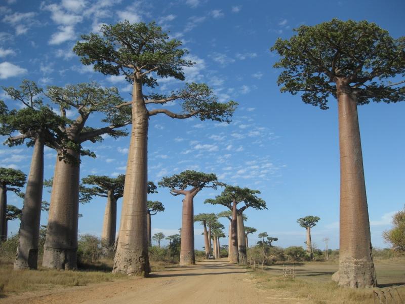 2度目のマダガスカル