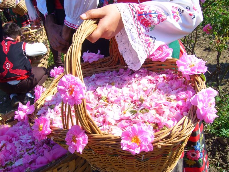 美しいバラで有名なカザンラク