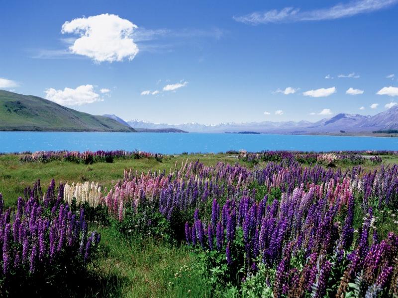 おすすめの絶景・秘境ツアー ニュージーランド/テカポ湖