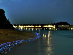ビーチで見られることがある夜光虫。