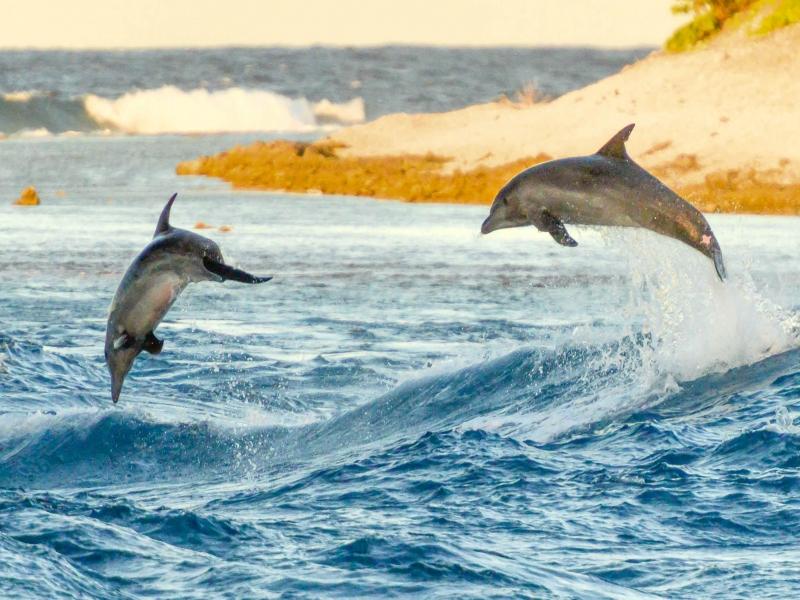 野生イルカの壮大なジャンプは必見!
