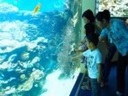 ニューカレドニアラグーン水族館