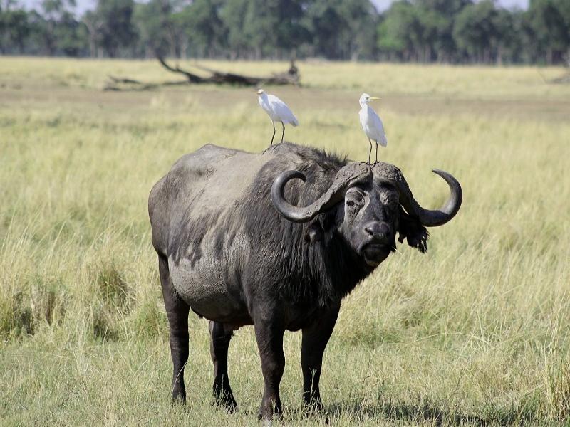 クルーガー国立公園で主に見ることができる動物
