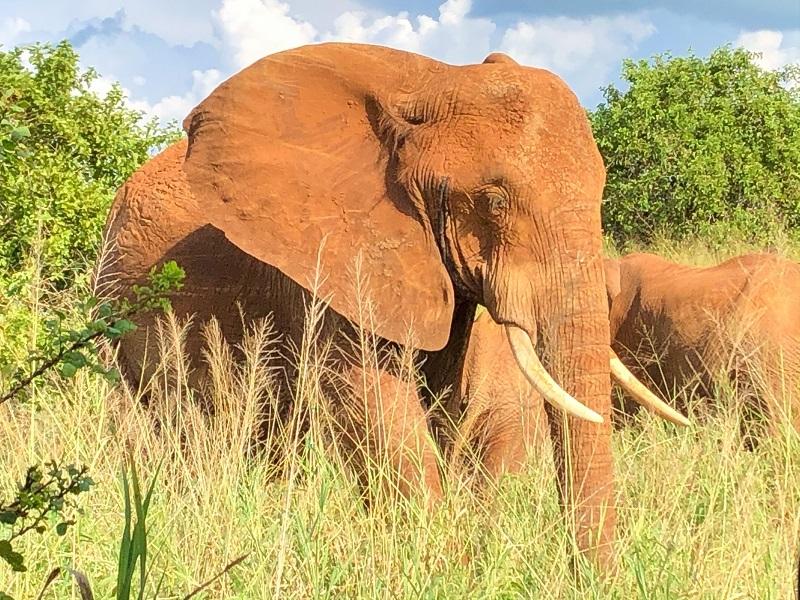タランギレ国立公園で主に見ることができる動物
