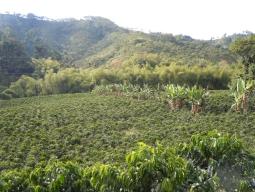美女と美食の国コロンビア!黄金伝説ボゴタとカリブ海の真珠カルタヘナ、聖なるコーヒーの里を訪ねる 9日間