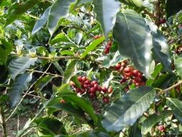 ≪COFFEE LOVERSの為の最高の一杯を求める旅≫スペシャリティコーヒーの最高峰コスタリカとサードウェーブの聖地ポートランドを訪ねる旅 8日間