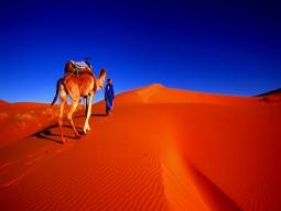 青い町シェフシャウエン&フェズ&サハラ砂漠をぐるっと周遊!ラクダに乗ってサンライズ観賞♪モロッコ周遊8日間