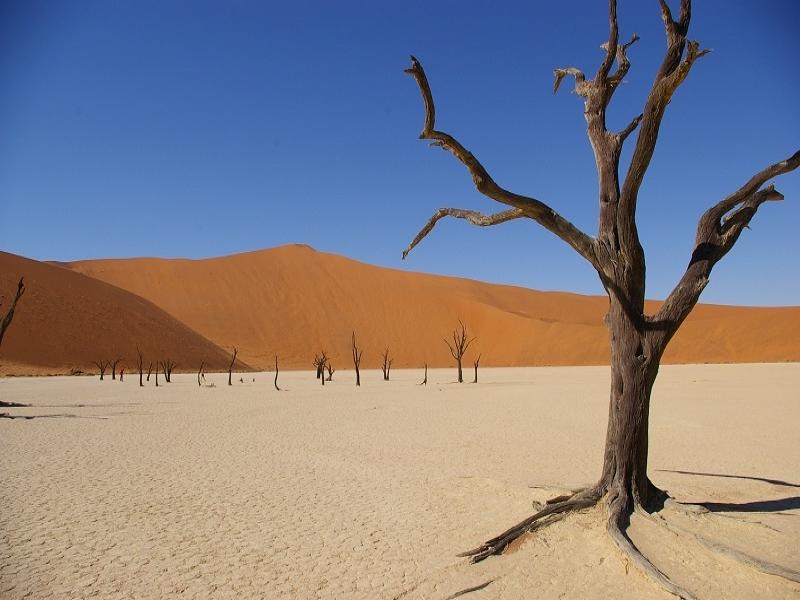 アフリカおすすめツアー