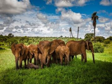 名古屋発ケニアひとり旅