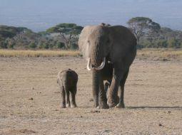 ジャンボ! 動物王国ケニア 癒しの旅
