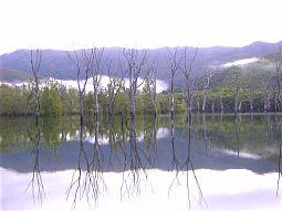 【写真左】鏡のような湖面に枯れ木を映し出され、不思議な光景
