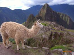 わくわくペルーひとり旅