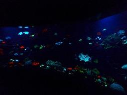 【写真右】世界的にも珍しい光るサンゴの展示