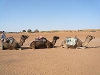 砂漠に泊まろう!