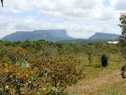 世界遺産カナイマ国立公園