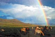 自然と人と動物と。それだけで大満足の旅♪