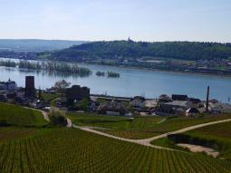 ドイツワインの名産地リューデスハイム&ライン川クルーズ!