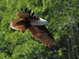 ☆マレーシアの大自然を堪能!☆ランカウイジオパーク・エコツアー