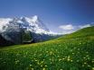 エミレーツ航空特集 ツアー検索 スイス
