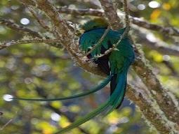 JALマイルたまるアメリカン航空~自然の宝庫コスタリカ~世界一美しい幻の鳥ケツァールを探しに!モンテベルデとアレナル周遊☆温泉体験 7日間