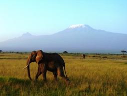 <エティハド航空>ムパタサファリクラブに宿泊☆マサイマラへは飛行機移動♪キリマンジャロの麓アンボセリ&野生動物の宝庫マサイマラ7日間
