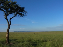短い休みでもアフリカへ!専用車でめぐる野生動物の宝庫ケニア☆マサイマラ国立保護区2連泊6日間