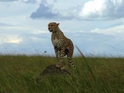 ケニア4大国立公園を周遊☆アンボセリ&アバーディア&ナクル湖&マサイマラ/人気のムパタサファリクラブ2連泊9日間