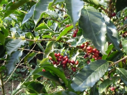≪COFFEE LOVERSのための最高の一杯を求める旅≫スペシャリティコーヒーの最高峰コスタリカとサードウェーブの聖地ポートランドを訪ねる旅