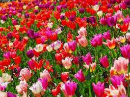 <オランダ・ベルギー周遊>KLMオランダ航空で行く★美しい街並みと芸術を巡る旅 アムステルダム&ブリュッセル7日間 デラックスホテル指定
