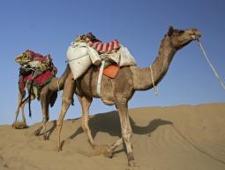 【極み旅】タール砂漠でキャメルサファリ!ブルーシティ・ジョードプルとピンクシティ・ジャイプール 砂漠の国ラジャスターン大周遊8日間