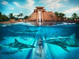<バハマ3泊&オーランド3泊>巨大テーマパークリゾートのアトランティス・パラダイス・アイランド&ディズニー・オールスターリゾート滞在8日間